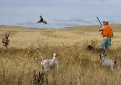 pheasant-hunt